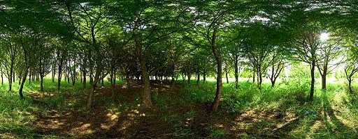 Bosque de Xochimilco. Parque Ecológico, Ciudad de México