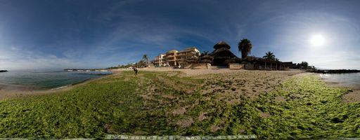 Invasión de algas, Punta de Mita, Nayarit, México